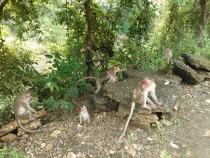 Monkeys along the way to Kanheri Caves